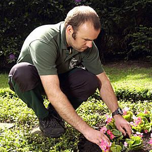 Gärtner bei der Grabpflege